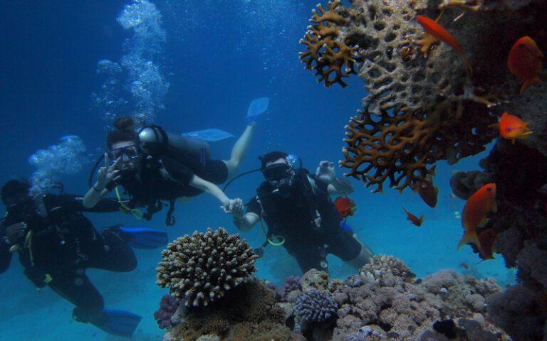 Best Automatic Dive Watch Under 1000